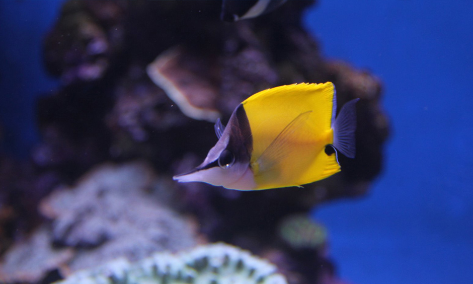 Pabisa Hotel Fish Palma Aquarium