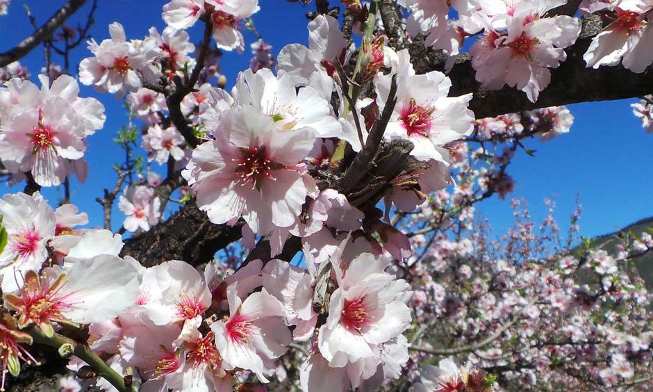 EN Pabisa Hotel Blossom flower Spring Mallorca holiday