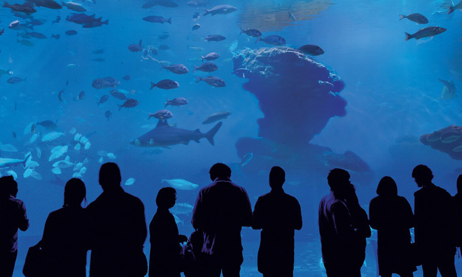 EN Pabisa Hotel Mallorca Aquarium Palma Spring
