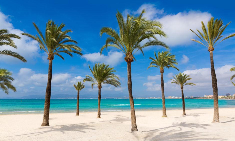 Pabisa Hotels Beach Mallorca palm tree