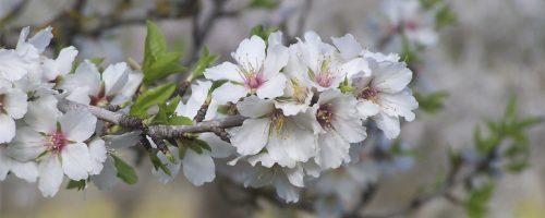 ES F Pabisa Hotels Mallorca Primavera flor