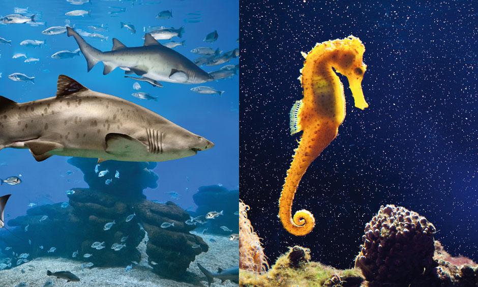 DE pabisa all inclusive plus Palma Aquarium bestes Hotel Playa de Palma