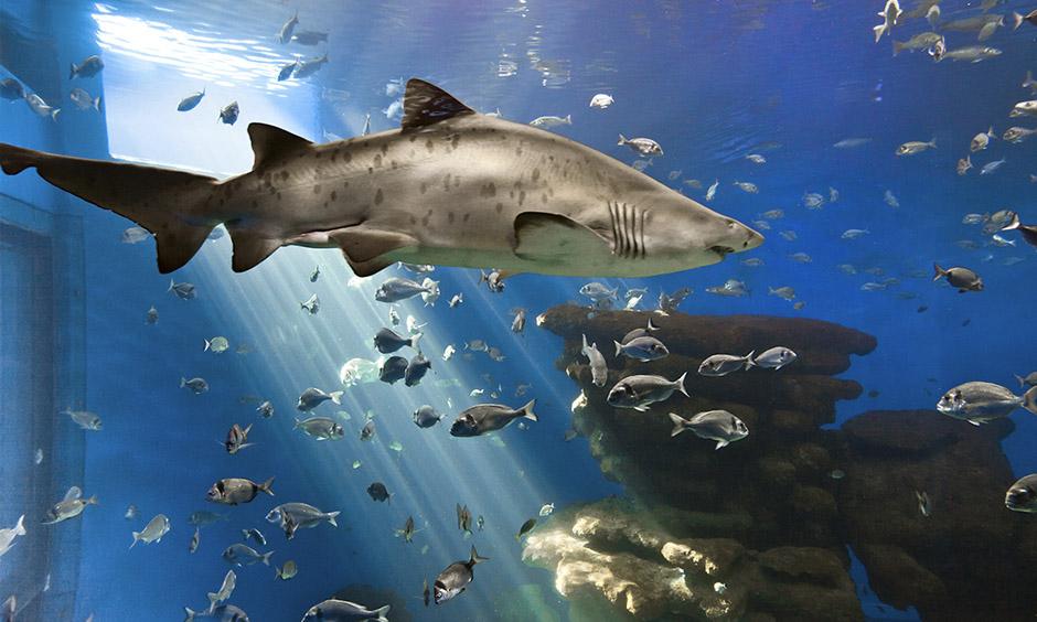 DE Familie Aktivitat Mallorca Palma Aquarium Playa de Palma Pabisa